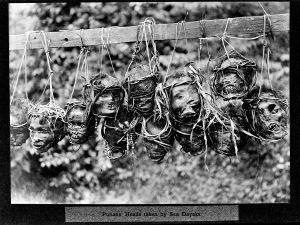 Punan's_heads_taken_by_Sea_Dayaks_Wellcome_M0005506