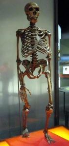 Neanderthalensis