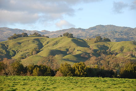 Rolling_hills_of_the_Napa_valley