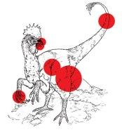 ff_chickensaurus3_f