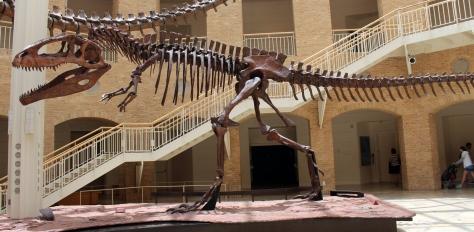 Giganotosaurus_at_Fernbank